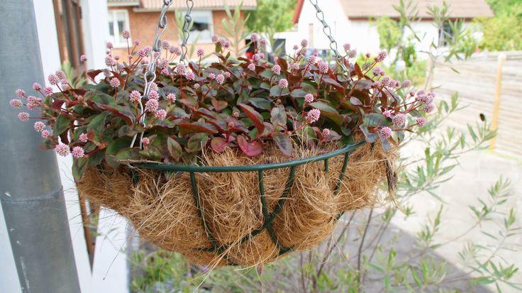 Krukkeplanter