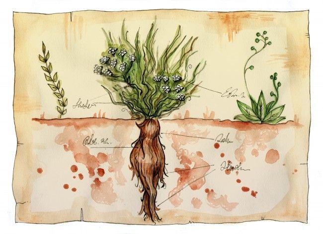 Plante magice | Divahair.ro