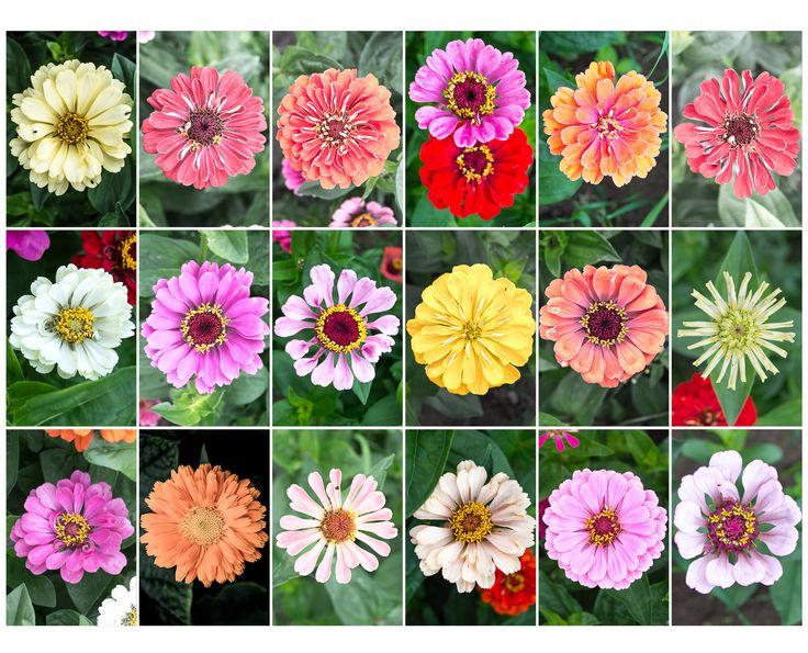 My mom flowers