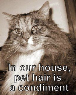 Condiment: Cats, Animals, Hairs, Pets, Funny, Funnies, House, Dog