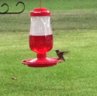 Love watching the Hummingbirds come to our feeders!!