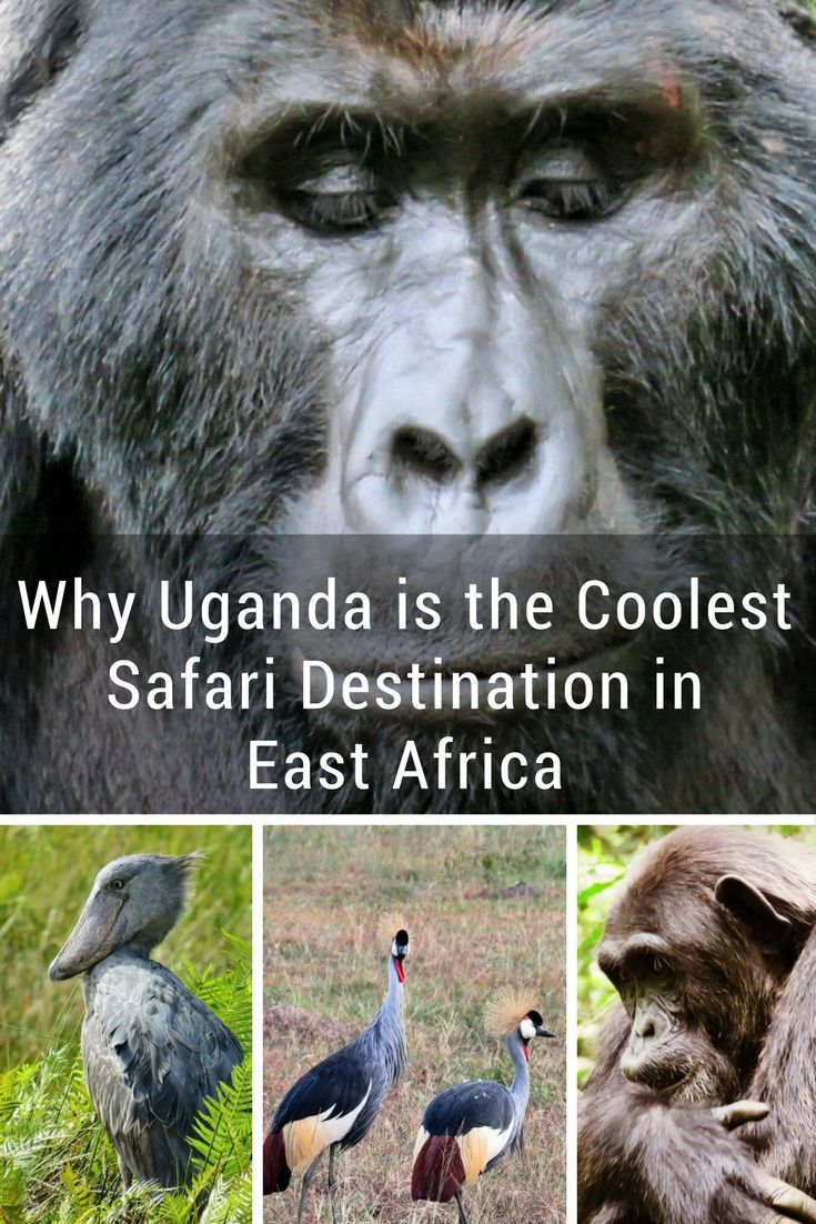 Why Visit Uganda? It's the Coolest Safari Destination in East Africa and Offers So Much More Than Just the Big 5
