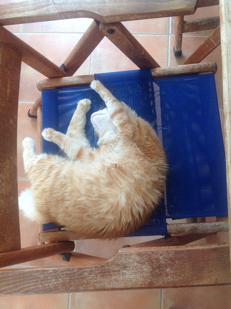 Sleep #cat #cats #sleep #foxy
