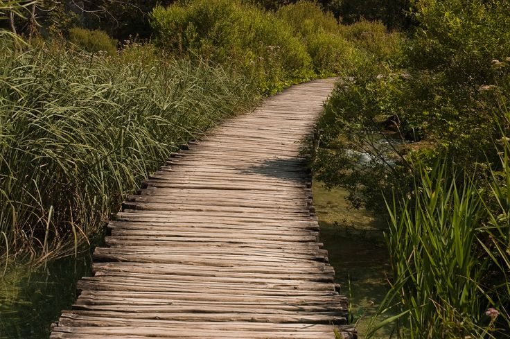 Beautiful wooden path- want to make one with Pallets