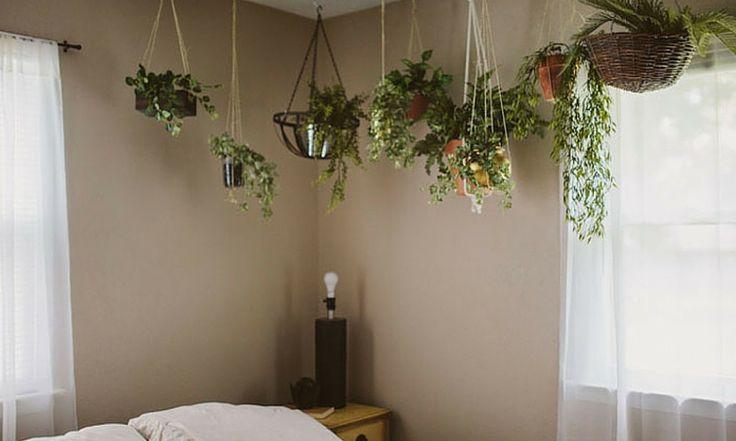 Sonno perfetto: le 5 piante da mettere in camera da letto