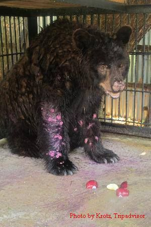 Please sign and share!  Beno the Bear going through hell while he dies at Surabaya Zoo! JOIN THE WORLDWIDE OUTCRY!    http://www.thepetitionsite.com/869/702/615/dont-let-benos-death-be-in-vain-save-the-surviving-animals-in-surabaya-zoo/ How long will it take, for this innocent soul to be out of danger??   why such slow reaction on the part of authorities??  indifference to suffering is evil