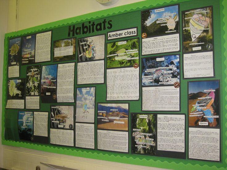 Habitat lesson ks2