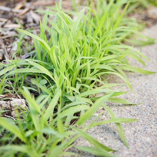 Learn about common weeds that grow in gardens or in lawns and how you can easily and safely prevent these weeds from growing, or get rid of the weeds if you already have them. Our common weed types include dandelion and crabgrass.