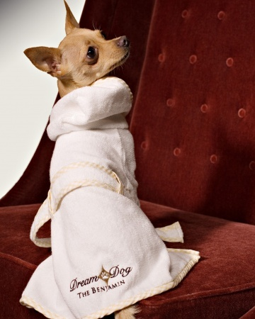 Pet hotels for the pampered pooch
