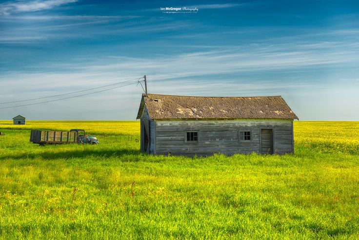 The Prairies 9511_13  The green grass and yellow canola contrast the old truck and farm buildings.