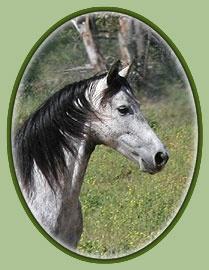 Dapple Horse