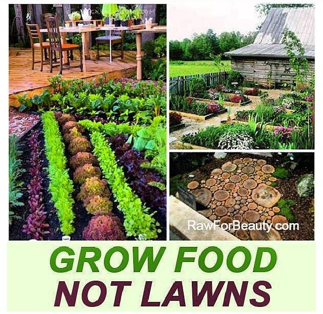 17 best images about climate change environment on pinterest for Backyard food garden ideas
