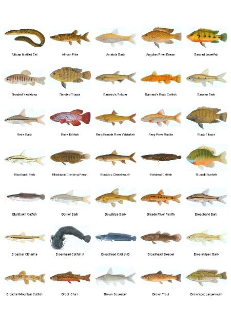 1000 Images About Fishing Id Charts On Pinterest Fresh