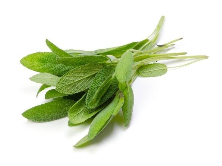 Salie   Salie is een van de meest geneeskrachtige planten van onze planeet. De Latijnse naam - Salvia officinalis - komt van het woord salvare , wat betekent 'om op te sl