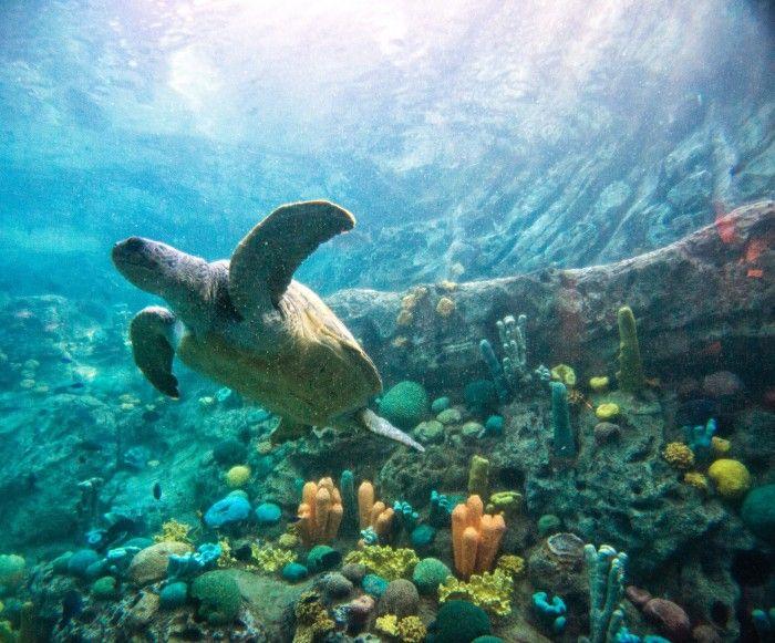 SATURDAY SIX: Six Reasons You Need to Check Out SeaWorld Orlando