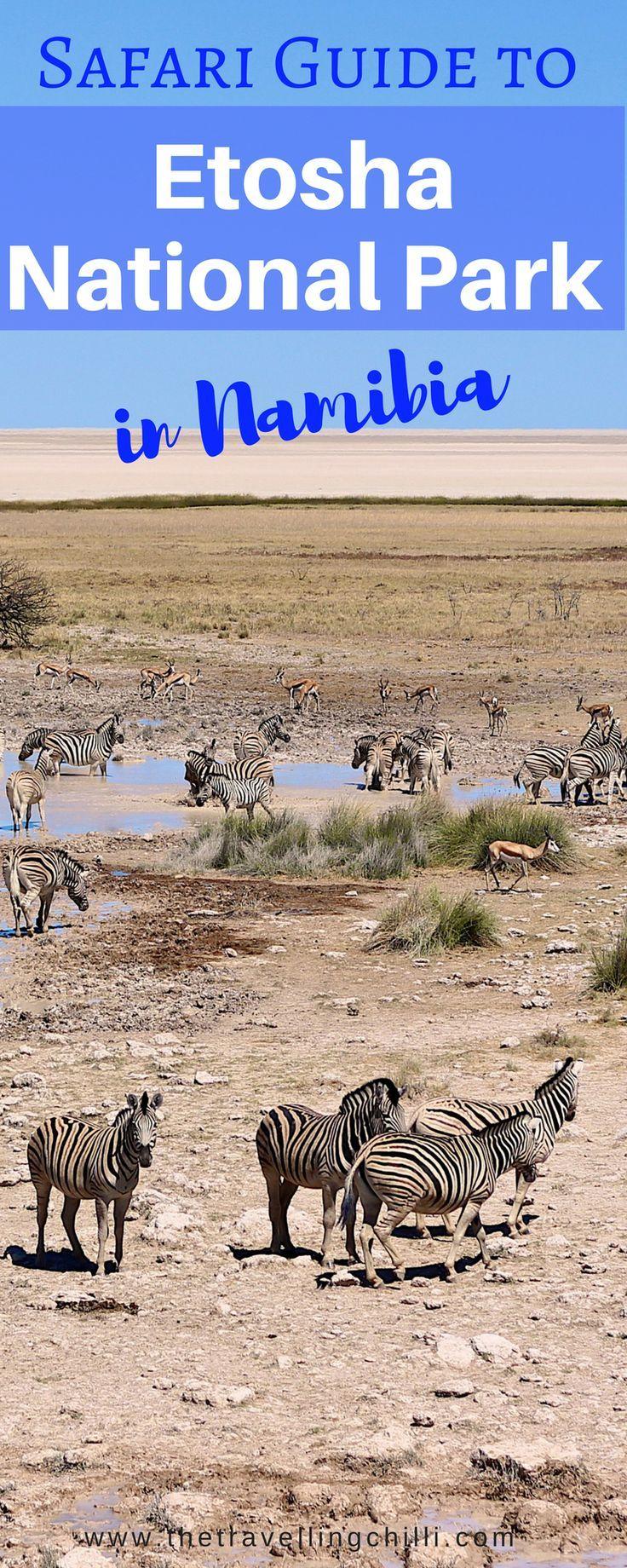 Safari guide to Etosha National Park in Namibia | Waterhole safari in Etosha National Park Namibia *********************************** #Namibia #EtoshaNationalPark #Africansafari #Wildlife