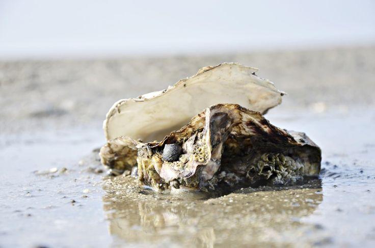 a beautiful Shell  www.frlweiss.de