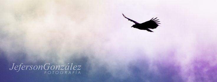 """""""La imaginación en libertad transforma al mundo y hecha a volar las cosas."""" Octavio Paz  #dreamer #sueños #ideas #change #passion #fuerza #vuelo #liberta #Abejorral #Antioquia #Colombia #fly #aves #birds"""