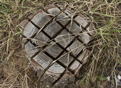 Baumstumpf einsägen