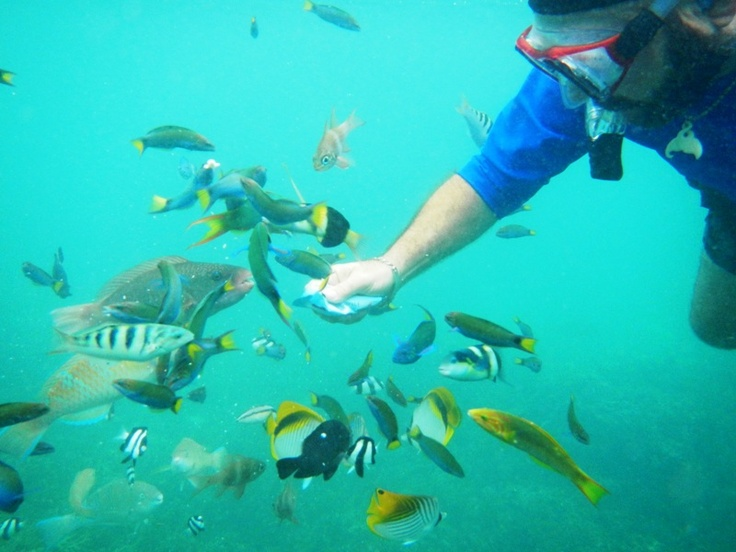 "feeding fish at ""the Rock"" , Isle of Pines"