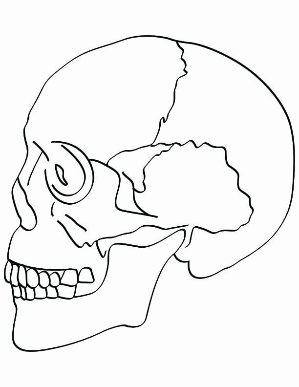Dog Bone Coloring Page Best Of Dog Bone Coloring Page At Getcolorings Skull Coloring Pages Anatomy Coloring Book Coloring Pages
