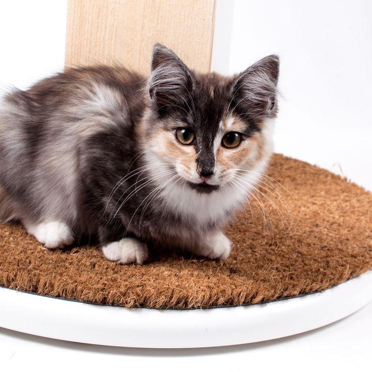 Har du problem med att din älskling klöser på favoritmöbeln hemma? Ge katten ett bättre alternativ att klösa på! Ett bra klösträd ska vara högre än katten är lång, den vill gärna sträcka ut sig ordentligt och gärna med sitt- och viloplats så katten kan klättra och leka. Använd trädet som en snygg inredningsdetalj och placera centralt så att katten kan sitta och titta ut genom ett fönster och ha koll på sin omgivning. Se våra klösträd på miwodesign.com
