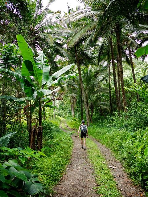 Hiking the Cross-Island Track (Rarotonga). The perfect balance to this tropical relaxation is to challenge yourself on Rarotonga's Cross-Island Track.