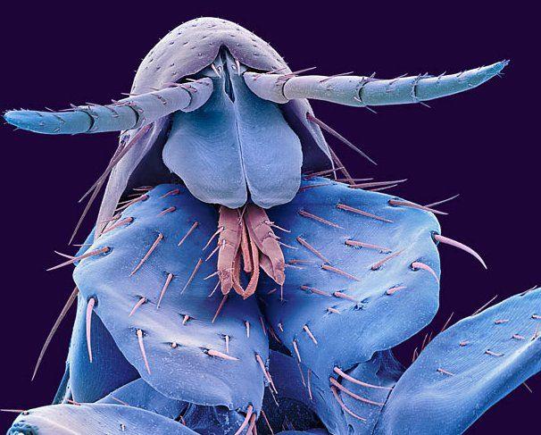 Fotos de insectos tras el microscopio electrónico