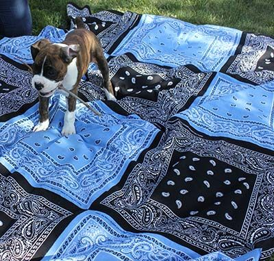 DIY Bandana Quilt by onegoodthingbyjillee:  It's a Picnic Blanket…It's a Tablecloth…It's whatever you dream it to be!  #DIY #Quilt #Bandana