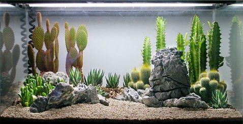 Desertscape terrarium from an aquarium