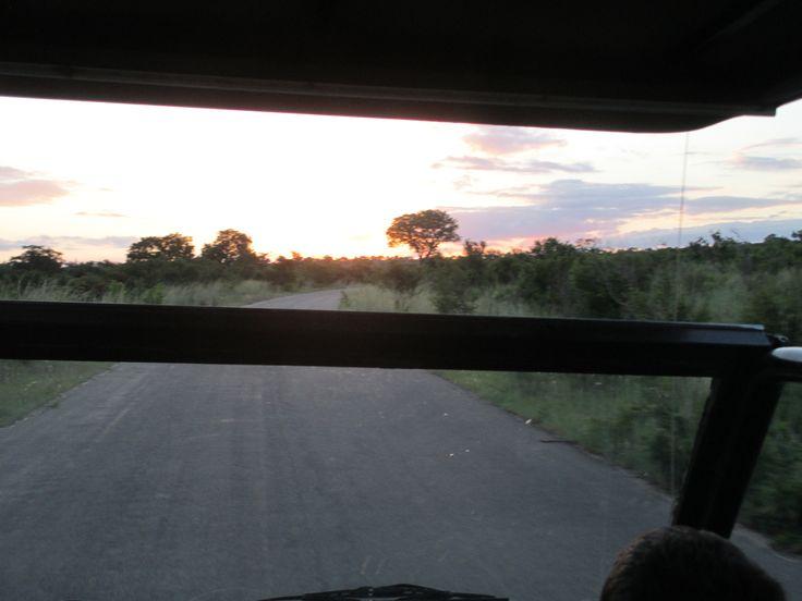 Sunset in the bush.