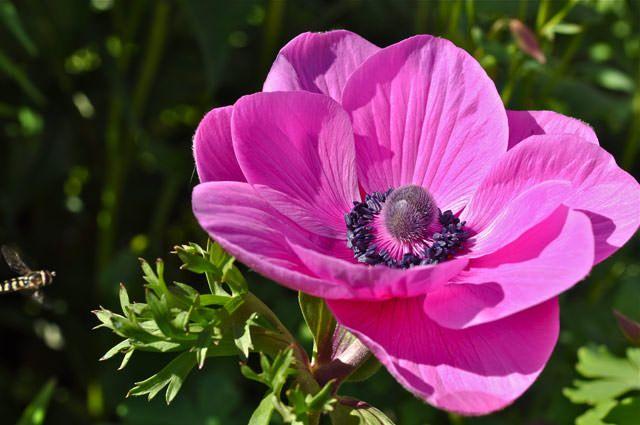 anemon.jpg (640×425)