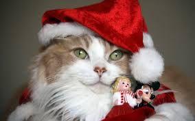 """Képtalálat a következőre: """"állatos karácsonyi képek"""""""