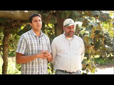 """J.T. and Jasbir Kullar, California Kiwifruit Farmers """"Farming is all I've ever known, from India to California,"""" he says. """"I don't see how anyone wouldn't want to do this — you're outdoors, working with your hands and feeding the world."""""""