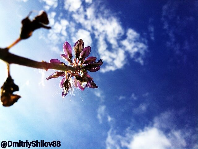 https://instagram.com/DmitriyShilov88 <<< #Followme #Photo #Art #Instagram #Photoart #DmitriyShilov88 #skylovers #sunset_madness #morning #iskygram #orange  #tagsta #dayshots #primeshots #sunshotz #instamillion #skypainters #photowall #instagain #instagroove #sunspotters #sunset_pics #bright #sol #sunsetporn  #skystyles_gf #beautiful  #sunlight  #sundown #dusk  #tagstagramers #Flower