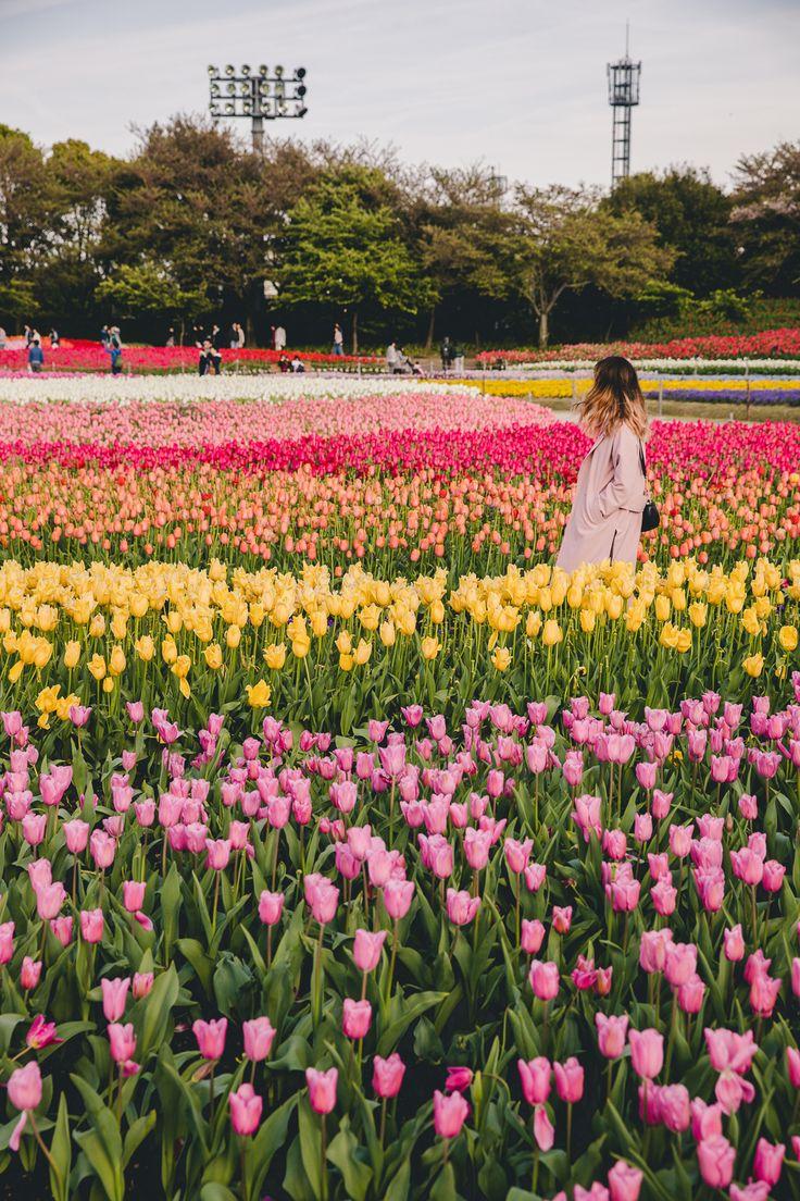 Nabana No Sato, a must see flower park in Japan near Nagoya.  More on: http://www.kisforkani.com/2017/06/nabana-no-sato-flower-filled-place-like-no/