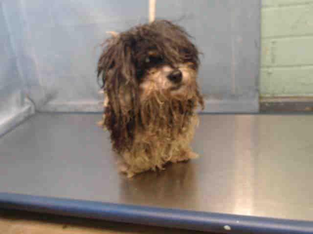 Www Petharbor Com Pet Laco1 A5368846 In 2020 Animals Senior Dog Animal Control