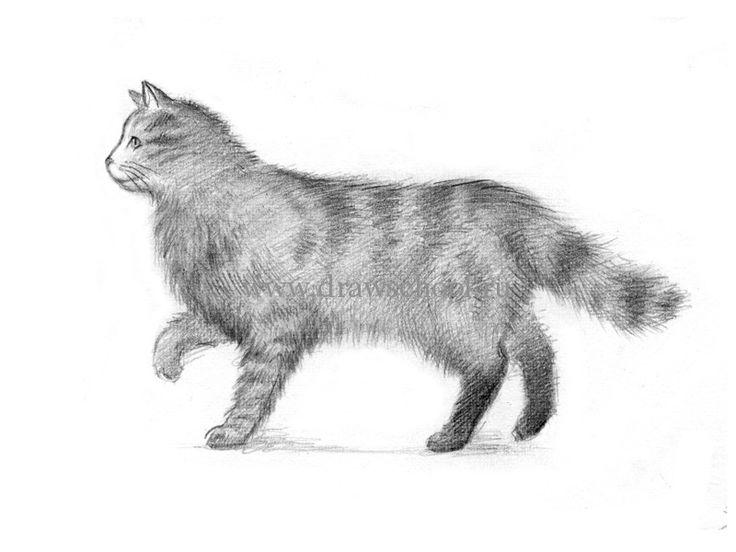 идущий кот вид с боку картинки пользоваться овоскопом, чтобы