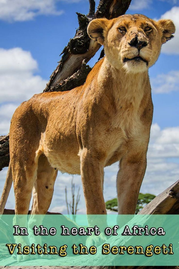 Beautiful Serengeti National Park Ideas On Pinterest Air - 9 things to see and do in serengeti national park