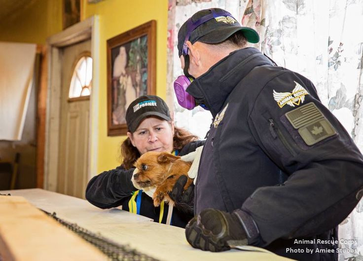 Puppy Mill rescue Animal Recue Corps and Puppy Mill Project save dogs