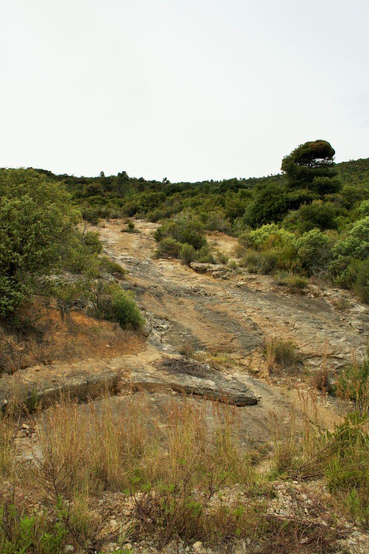 Rocce laviche nella macchia mediterranea, Monte Nero, Bordighera.