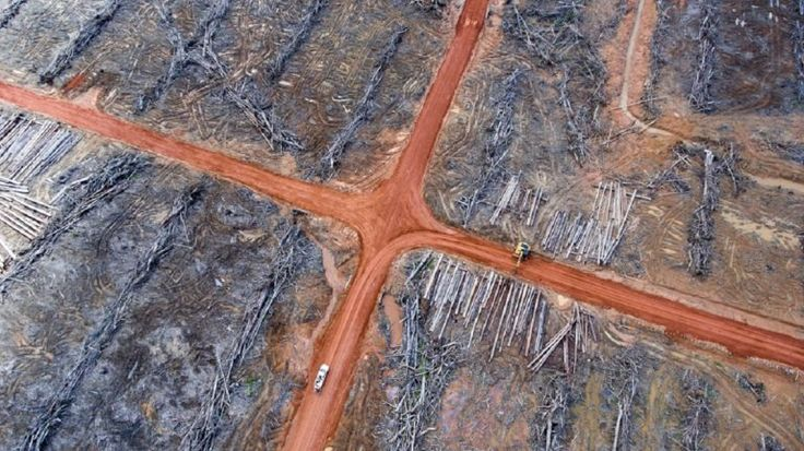 An online petition asking Samsung to drop its partnership with a Korean-Indonesian conglomerate over concerns of rainforest destruction on the island of New Guinea has garnered over 73,000 signatures. Samsung recently announced a joint venture with Korindo, in the logistics sector. Meanwhile Korindo's palm oil operation has come under fire for devastating pristine rainforest in […]