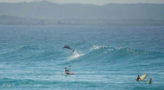 I can surf too