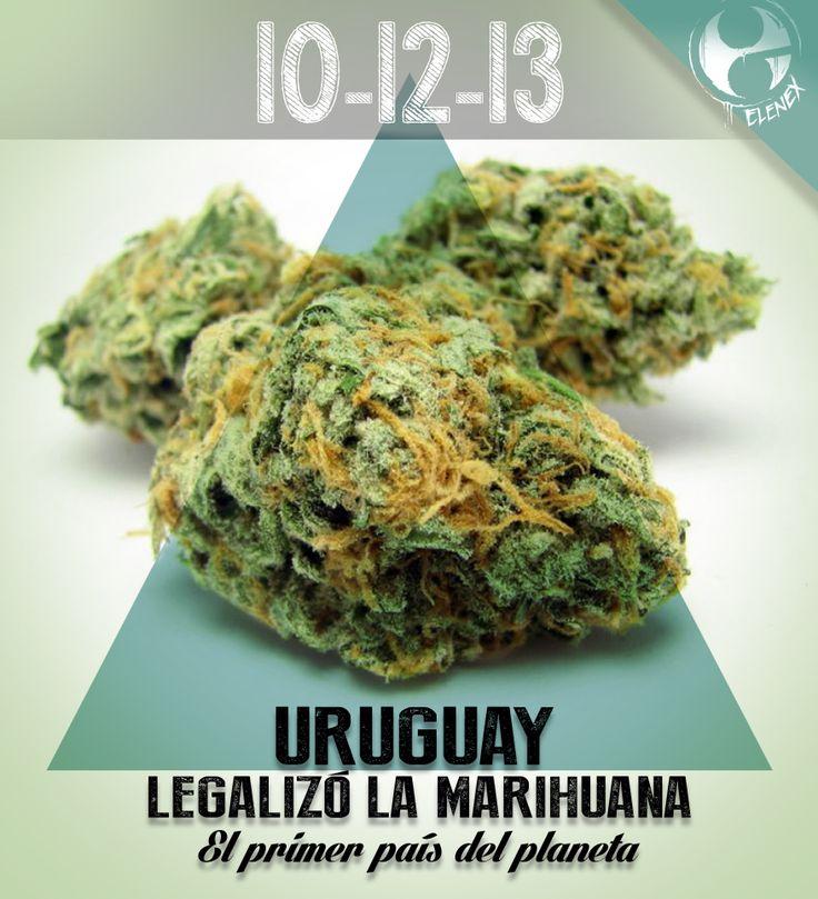 LEGALIZACION PRIMERO EN URUGUAY  poster para la marca elenex