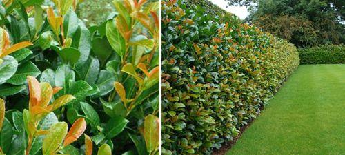 48 best sunshine planters images on pinterest gardening landscaping and garden ideas. Black Bedroom Furniture Sets. Home Design Ideas