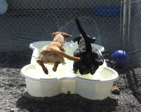 Niche Business Goes To The Dogs: Swimming Pools For Your Pets    ---  from InventorSpot.com --- for the coolest new products and wackiest inventions.