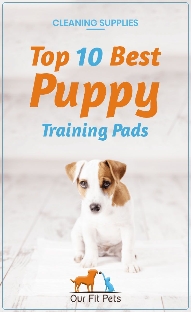 How To Get A Puppy To Use A Puppy Pad