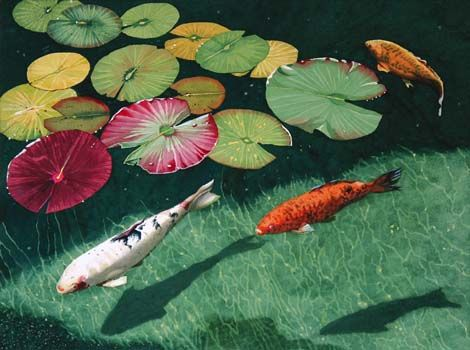 26 best images about tattoo design koi on pinterest for Coy carp fish