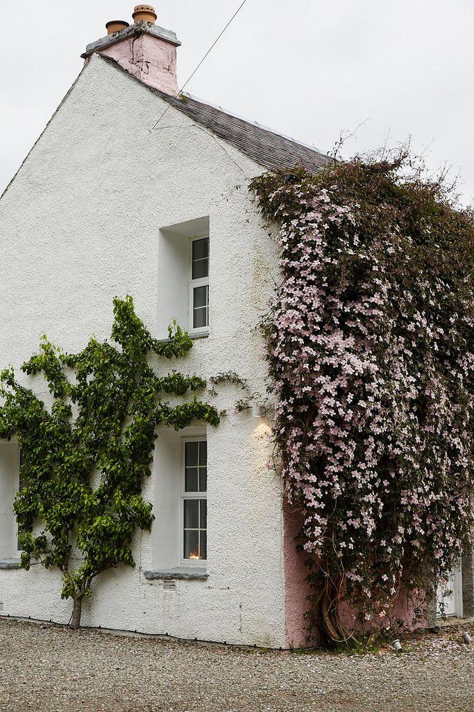 Flower and vine covered cottage in Scotland | Nicole Franzen
