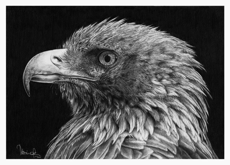 Best Hyperrealism Art Images On Pinterest Hyperrealism - Amazingly realistic pencil drawings monica lee